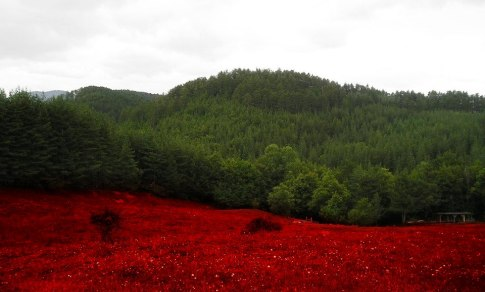 Bulgaria_flag_nature