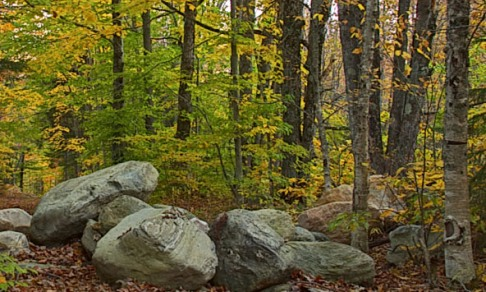 Rocks_forest_001