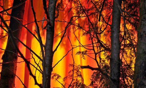 Forest_fire_in_Bulgaria_004