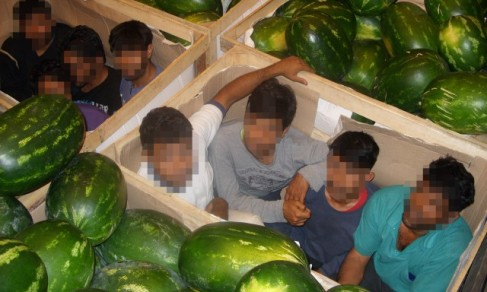 Immigrants_watermelons